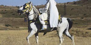 2 CAV Araber-Berber 4_2004