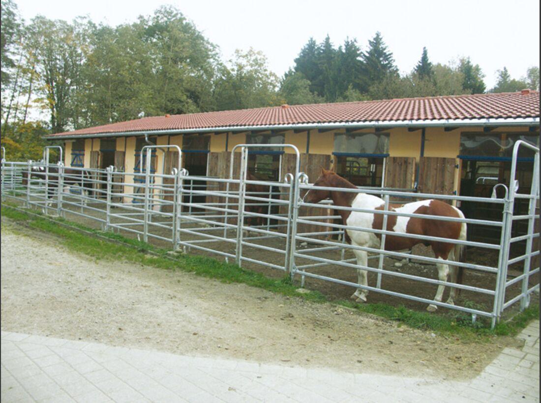 CA Reitschultest 1206 Saddle1 (jpg)