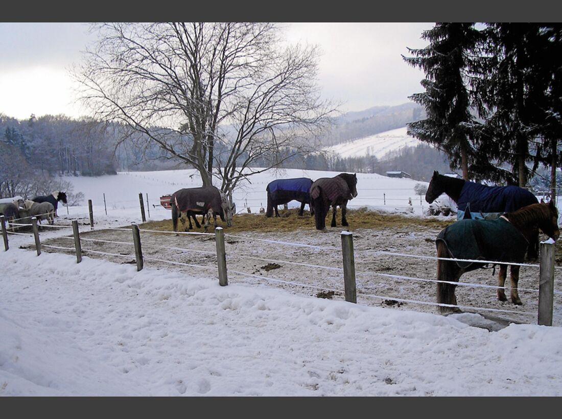 CAV_0311_Reitschultest_Horsefield-Ranch_4 (jpg)