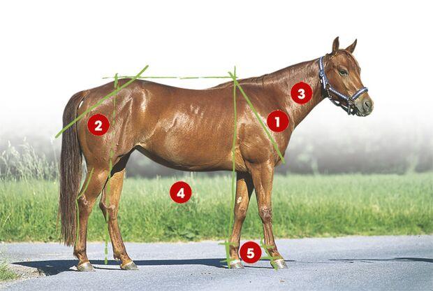 CAV 0503 Exterieur_Quarter Horses_03 (jpg)