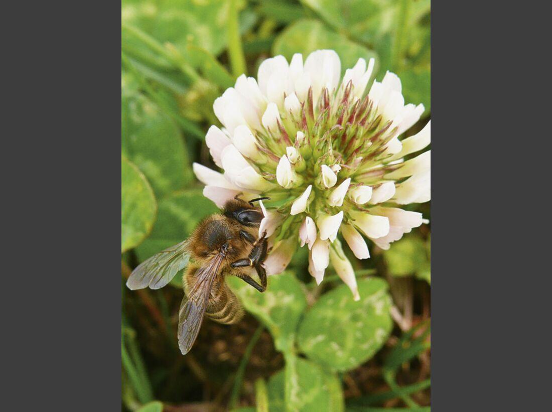 CAV 06_2010 Giftpflanzen_271062_R_K_B_by_Gabi-Schoenemann_pixelio (jpg)