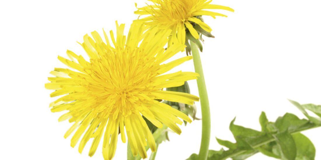 CAV 06_2010 Giftpflanzen_Fotolia_14103496_M (jpg)
