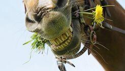 CAV 06_2010 Giftpflanzen__LIR6103 (jpg)