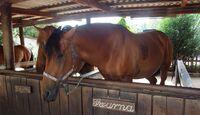 CAV 1011_Reitschultest Pfalz_Ponyfarm-12 (jpg)
