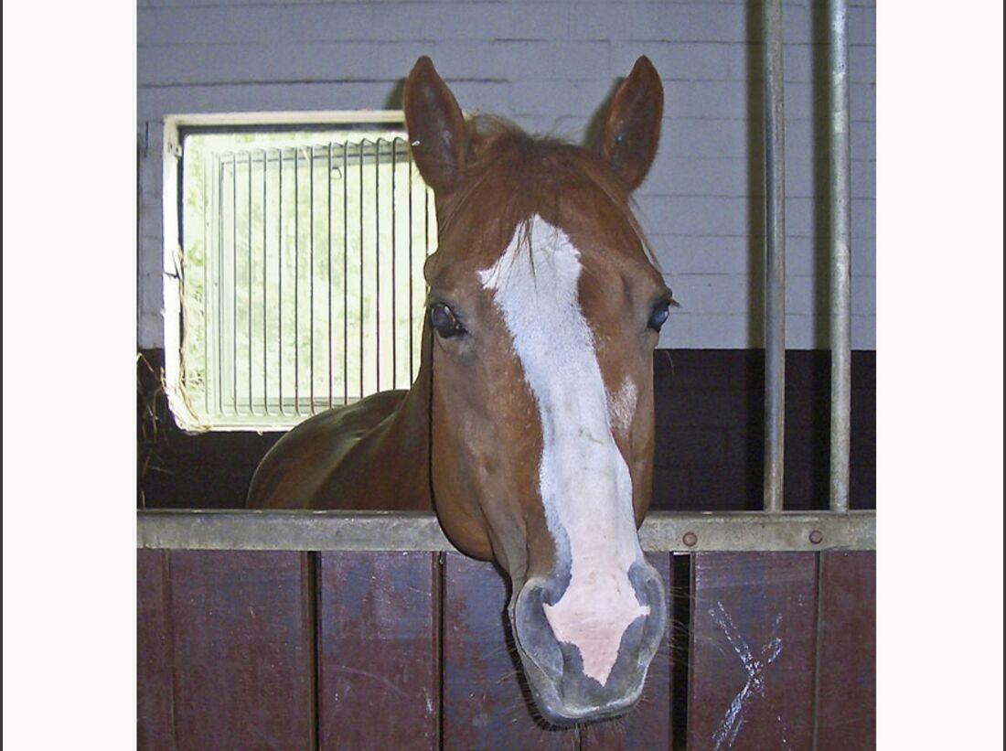 CAV_1210_Reitschultest_Horsefeelings_CIMG7748 (jpg)
