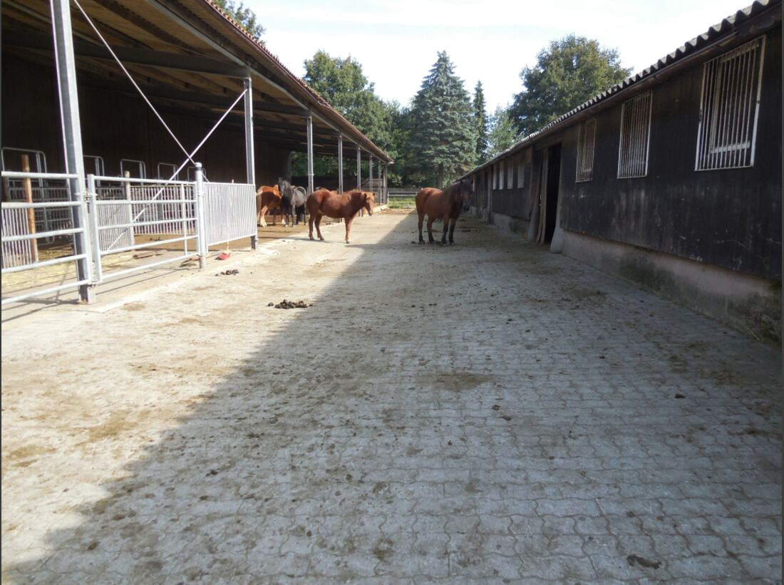 CAV-1213-Reitschultest-Wulfenhof 7_Lorenz - Kopie