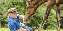CAV 201712 Alleine Pferde-Herde Aufmacher