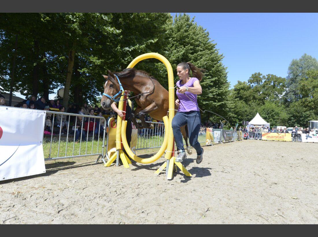 CAV Academy 2016 Freestyle Horse Agility