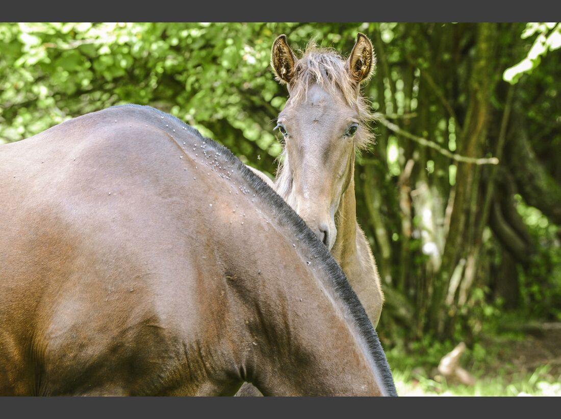 CAV Allein in der Pferde-Herde Aufmacher 03