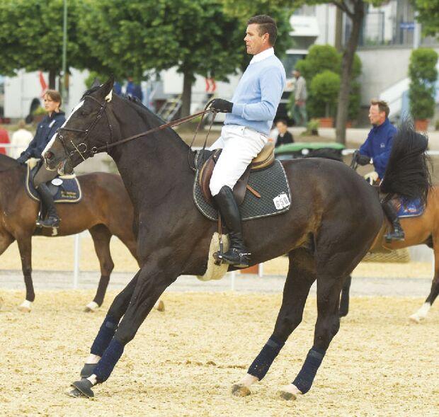 CAV Angst bei Sportpferden Bild9