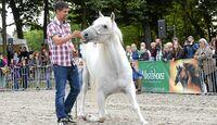 CAV-Anja-Rudolf-Pferdekenner-Cavallo-Cup-5
