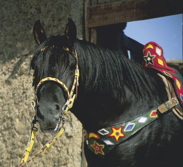 CAV Araber-Berber 11_2002 Bild 4
