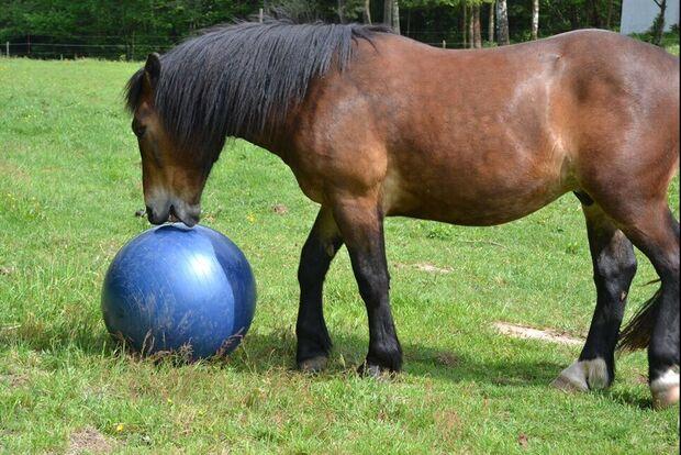 CAV Ball spielen Jule Schulze