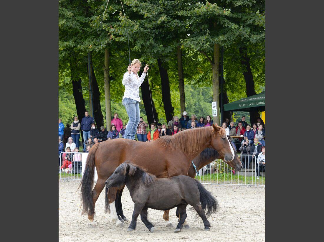 CAV-Cavallo-Academy-2014-10 (jpg)