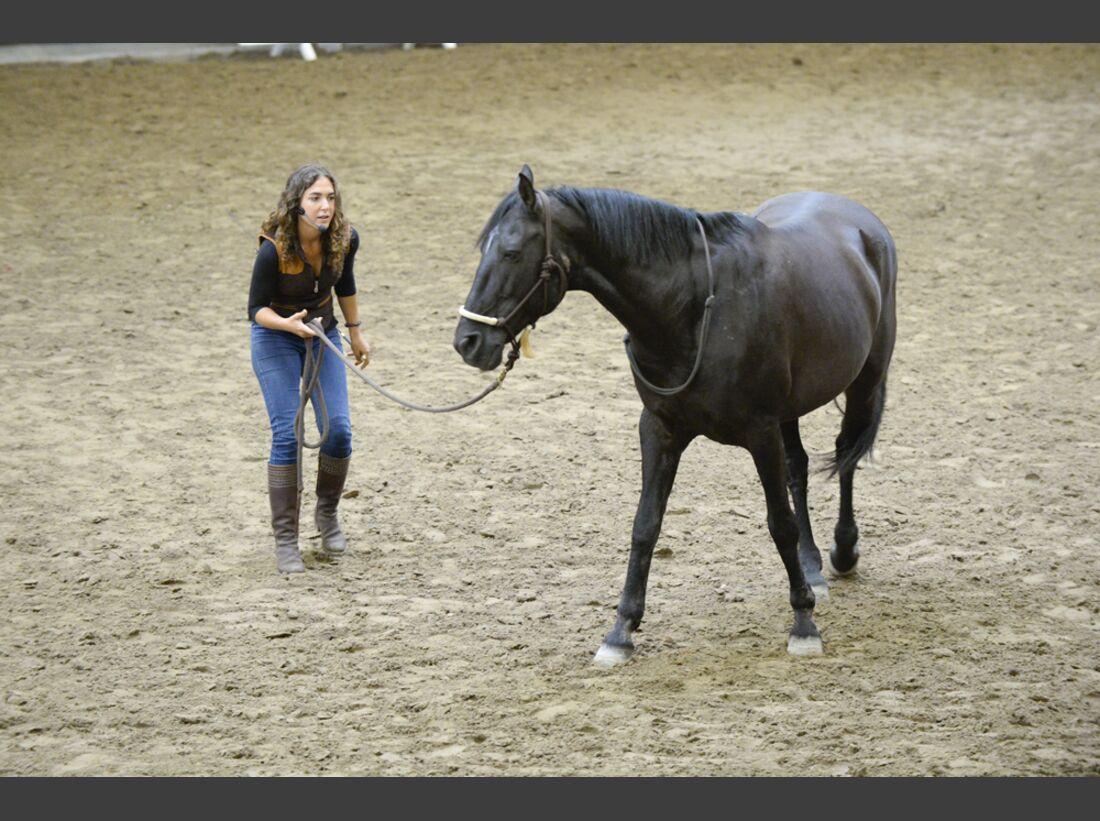 CAV-Cavallo-Academy-2014-16 (jpg)