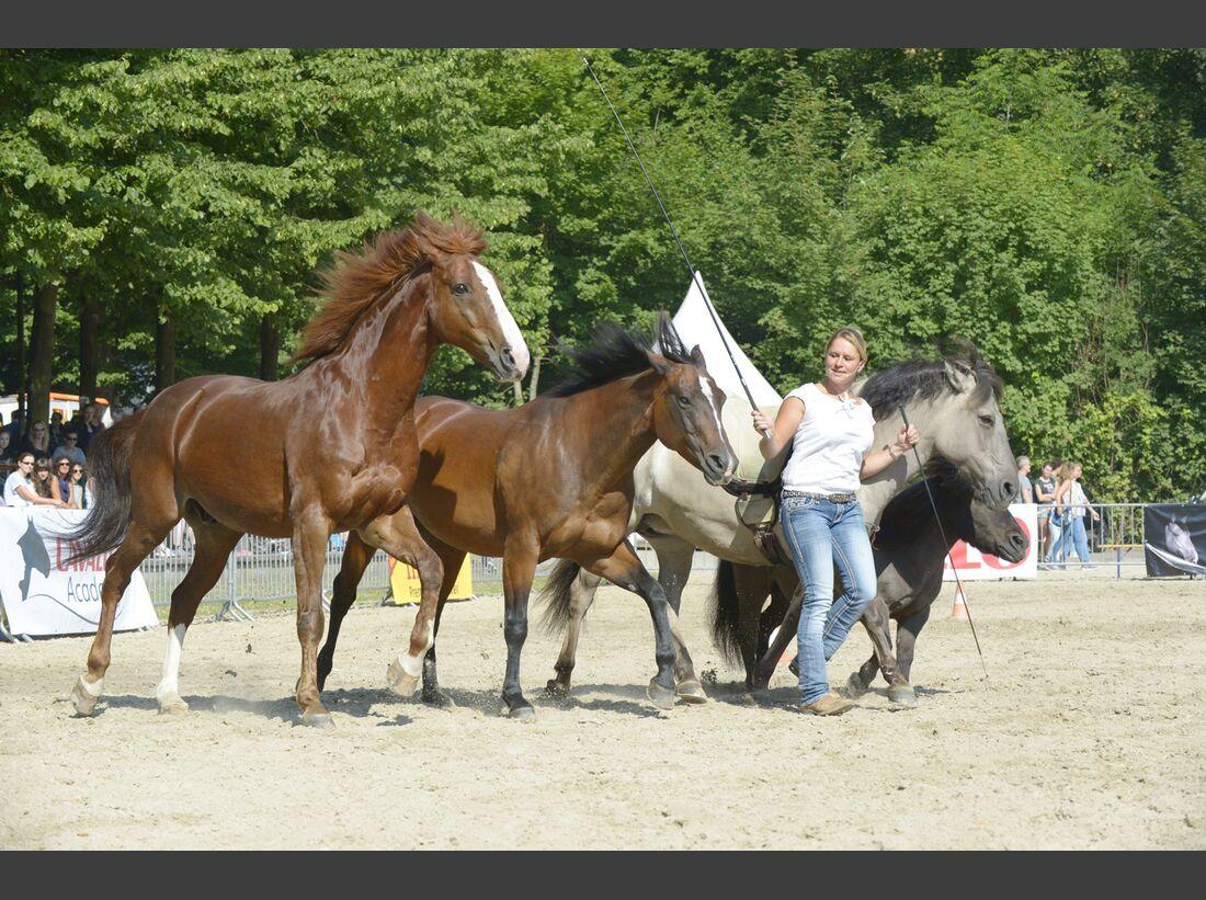 CAV Cavallo Academy 2017 Claudia Miller