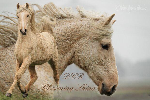 CAV Curly Horses Leserfotos Sylvia Hentzschel-Bahrs 1