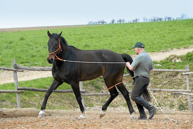 CAV Dressur Horsemanship 4