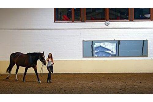 CAV Fan-Pferde 2013 Leserfotos Montchen