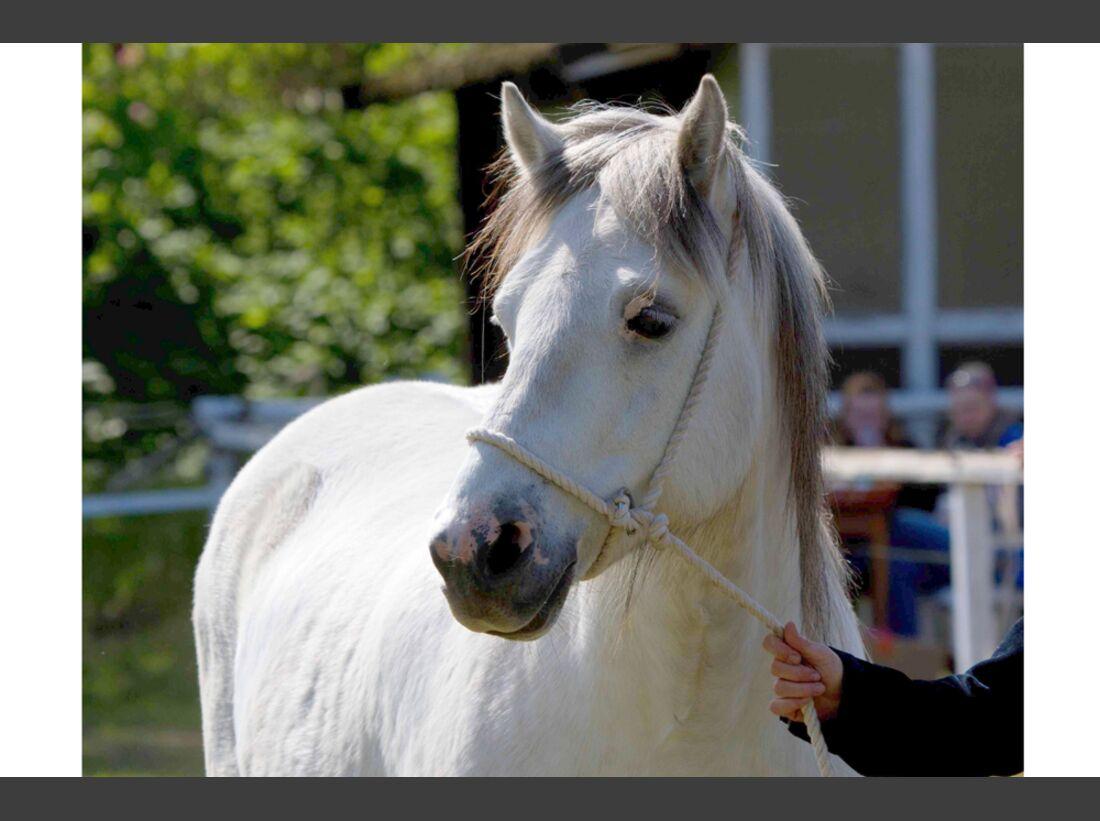 CAV Fan-Pferde Freddy Ute Grotheer