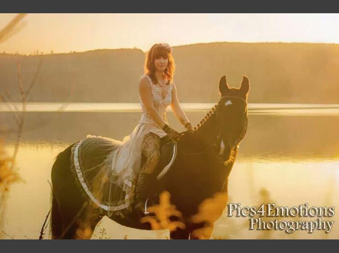 CAV Fan-Pferde Hemingvay Lisa Knebel