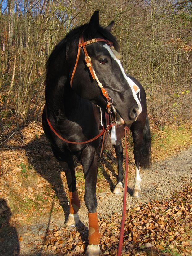 CAV-Fan-Pferde-Leseraktion-2013-Maximum-Banguy (jpg)