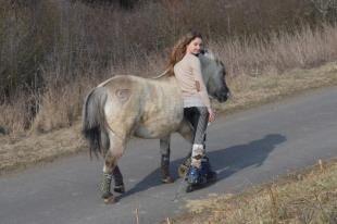CAV-Fan-Pferde-Leseraktion-2013-Mocco (jpg)