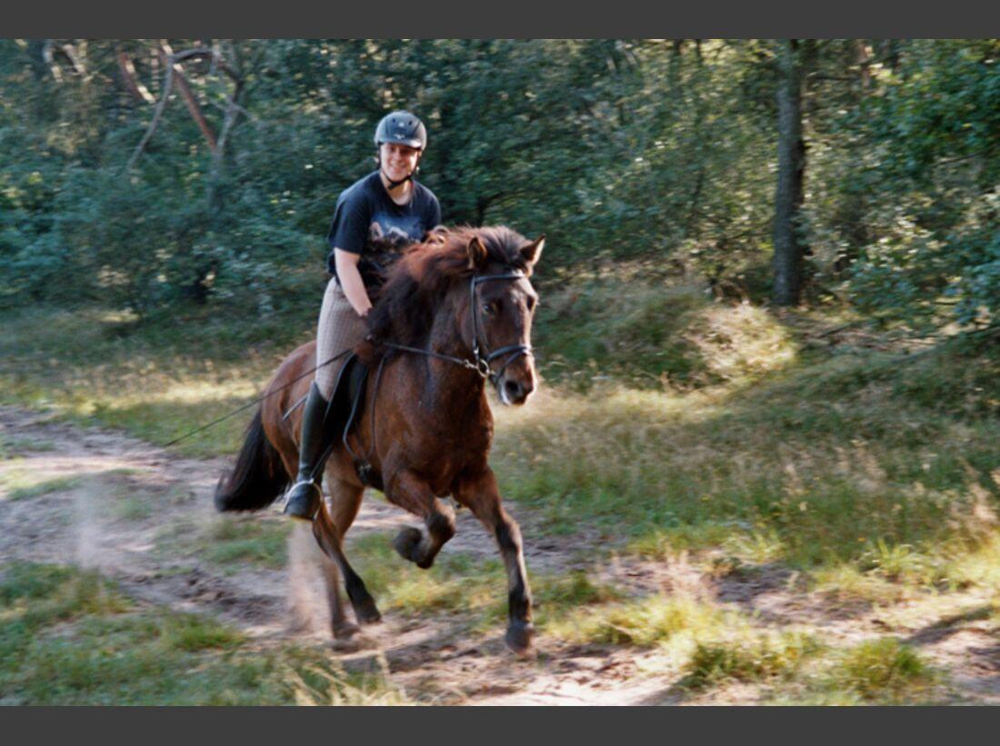 CAV-Fan-Pferde-Leseraktion-2013-Stephan_fanpferd (jpg)