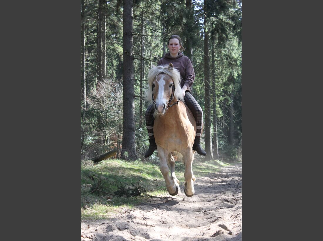 CAV-Fan-Pferde-Leseraktion-2013-Sunny2 (jpg)