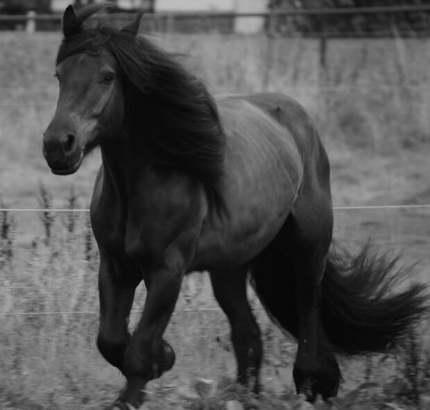 CAV-Fan-Pferde-Leseraktion-2013-Ted (jpg)