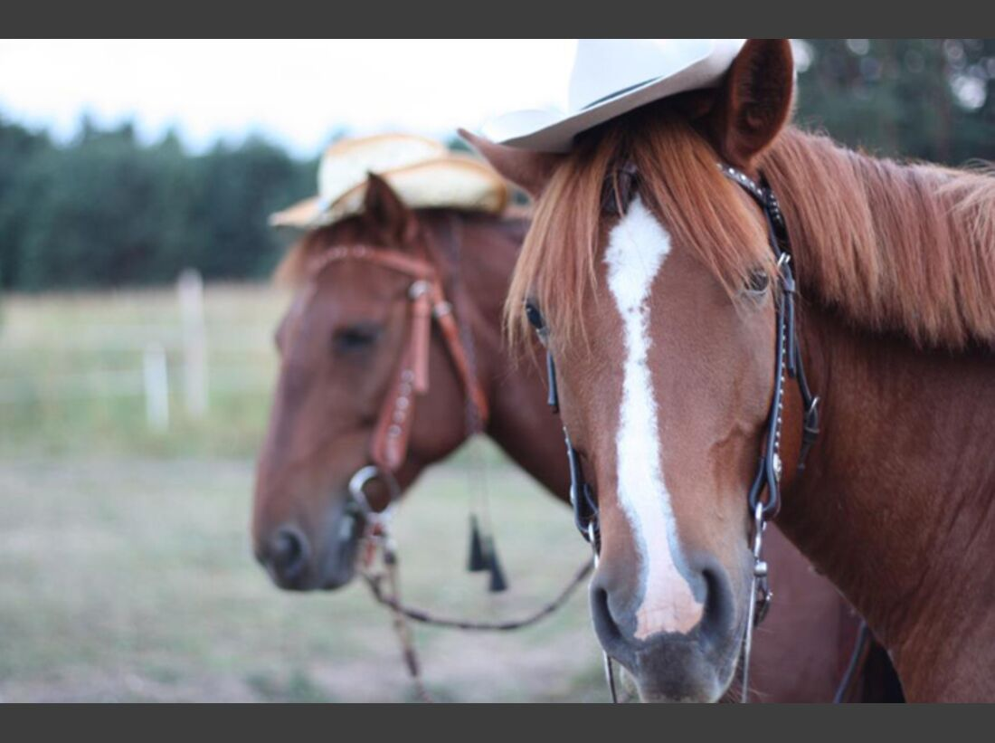CAV-Fan-Pferde-Leseraktion-2013-jango (jpg)