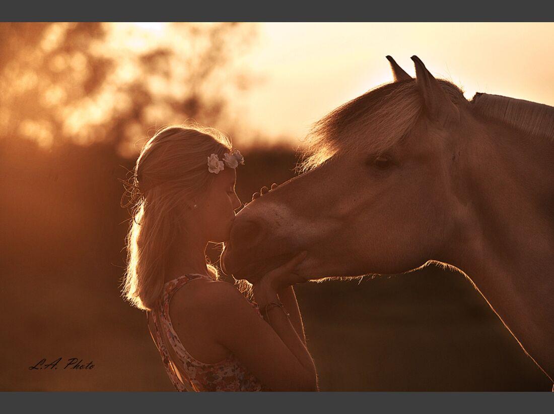 CAV Fan-Pferde Syrano Sarah Kaiser
