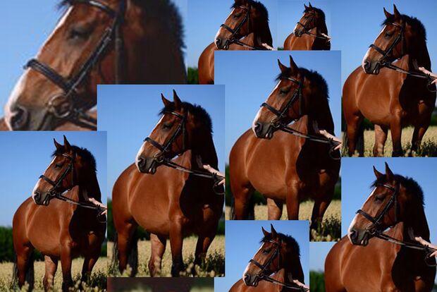 CAV Geburtstagspferde Jen Sir Louie