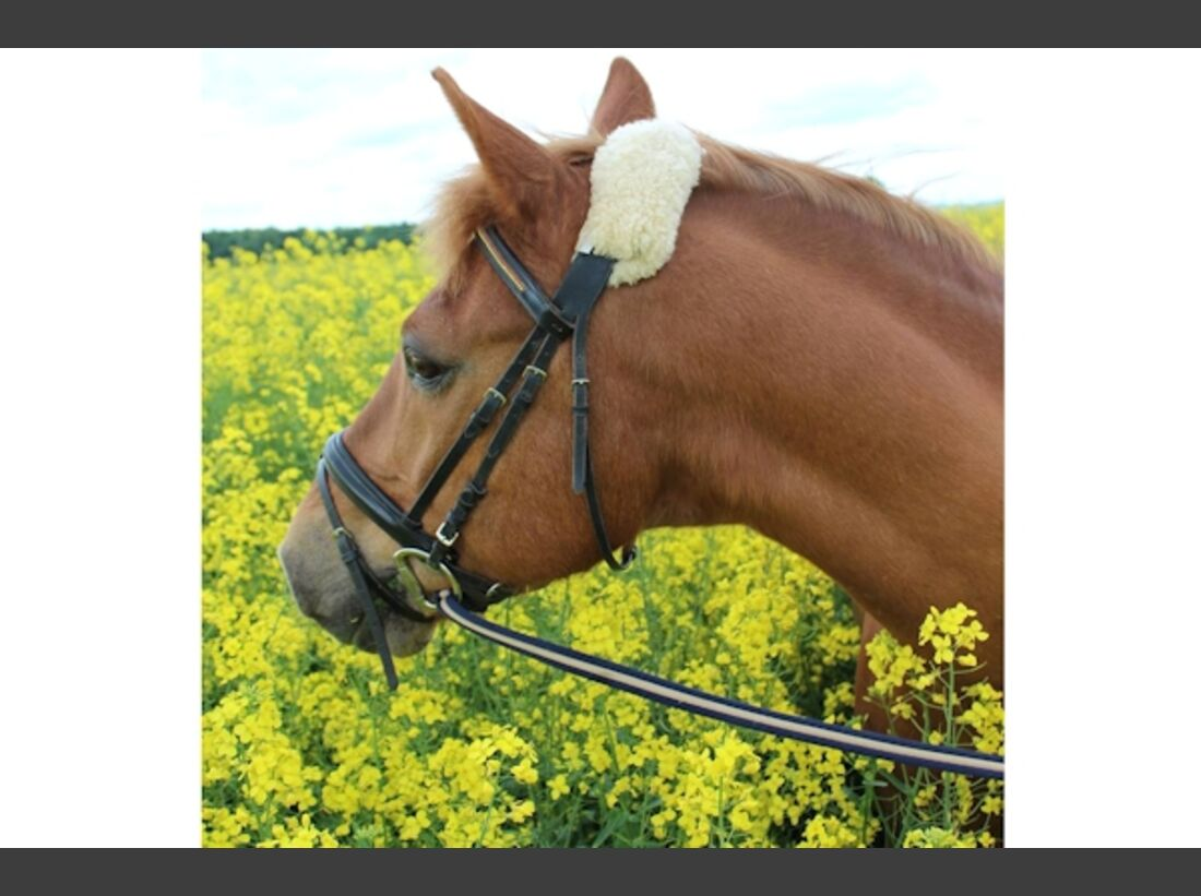 CAV Haflinger Pferderasse Rasse Leserfotos 59