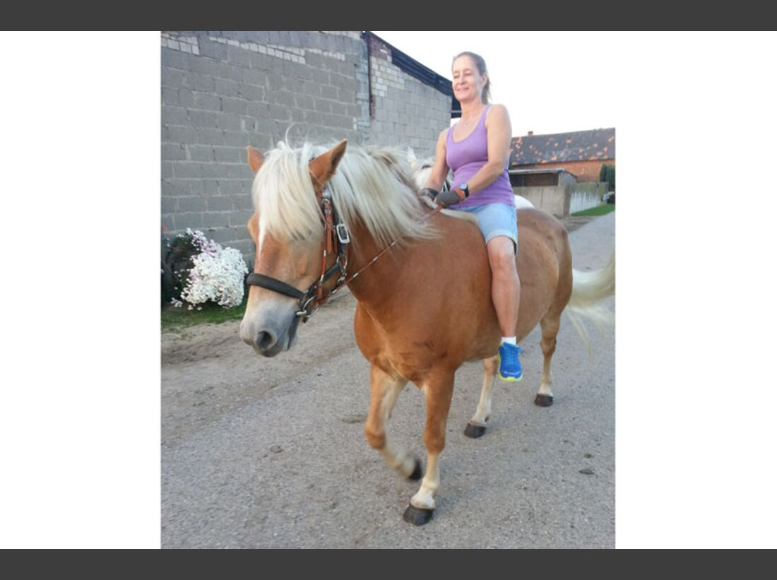 CAV Haflinger Pferderasse Rasse Leserfotos - Brachschoss