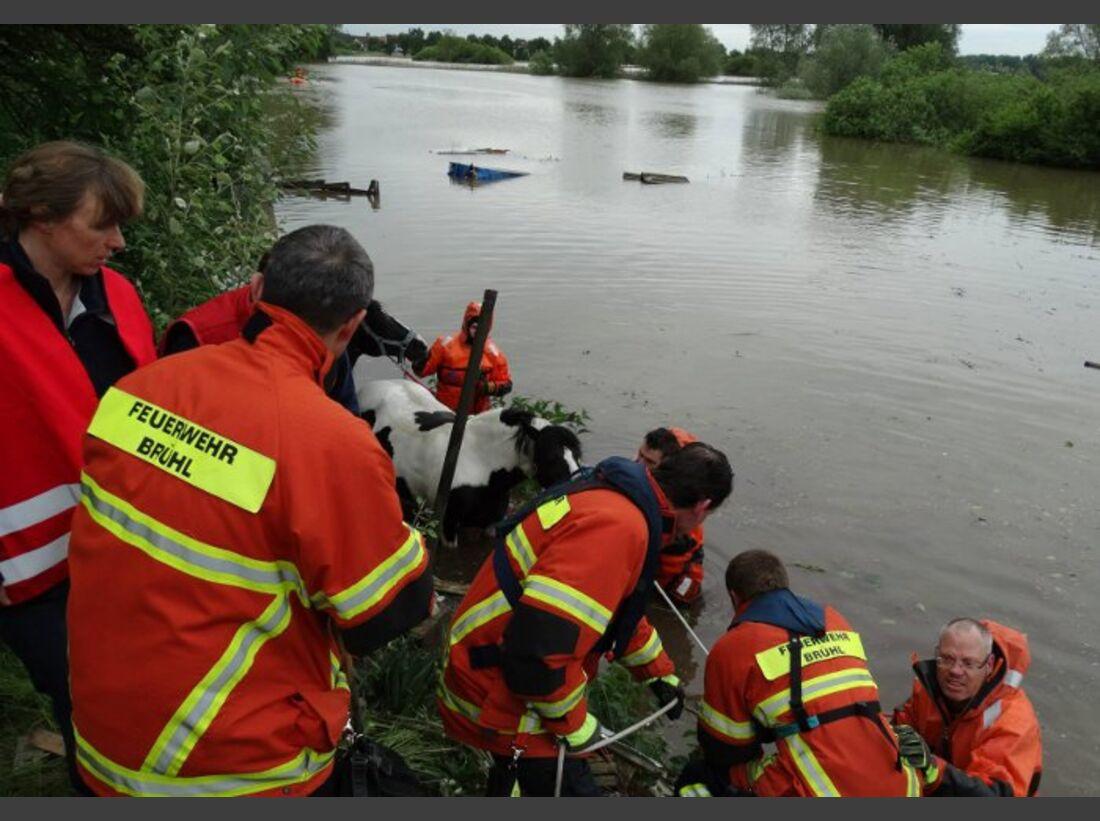CAV Hochwasser Flut Pferde-Rettung Tierrettung
