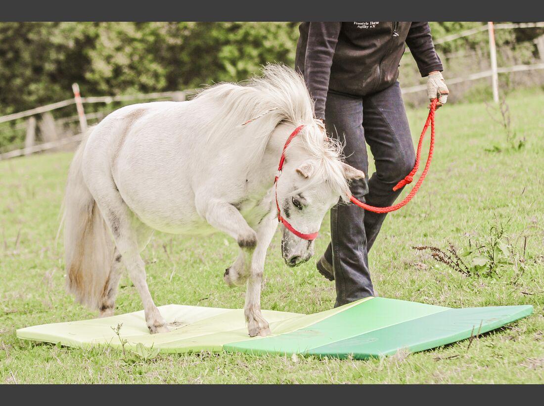 CAV Horse Agility alte Pferde Matratze