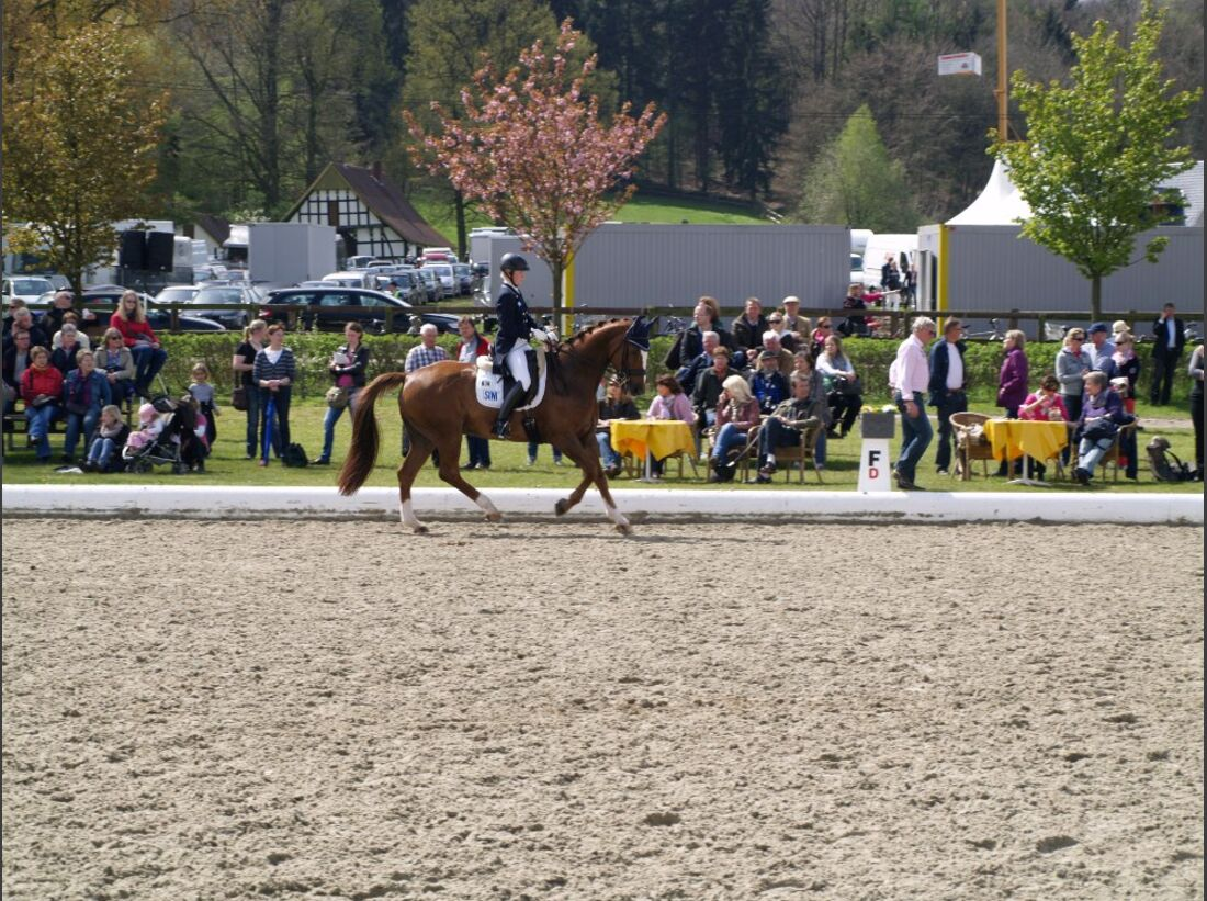 CAV Horses Dreams Emma Kanerva Sini Spirit