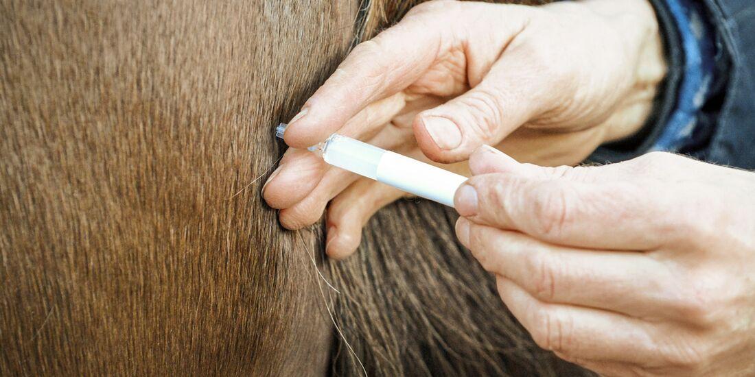 CAV Impfen Aufmacher Spritze