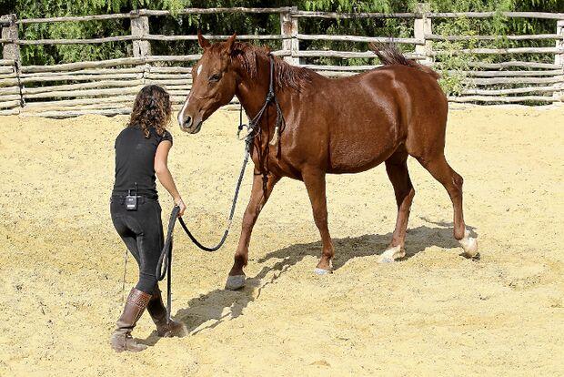 CAV Kenzie Dysli  Freiheitsdressur Horsemanship Halsring