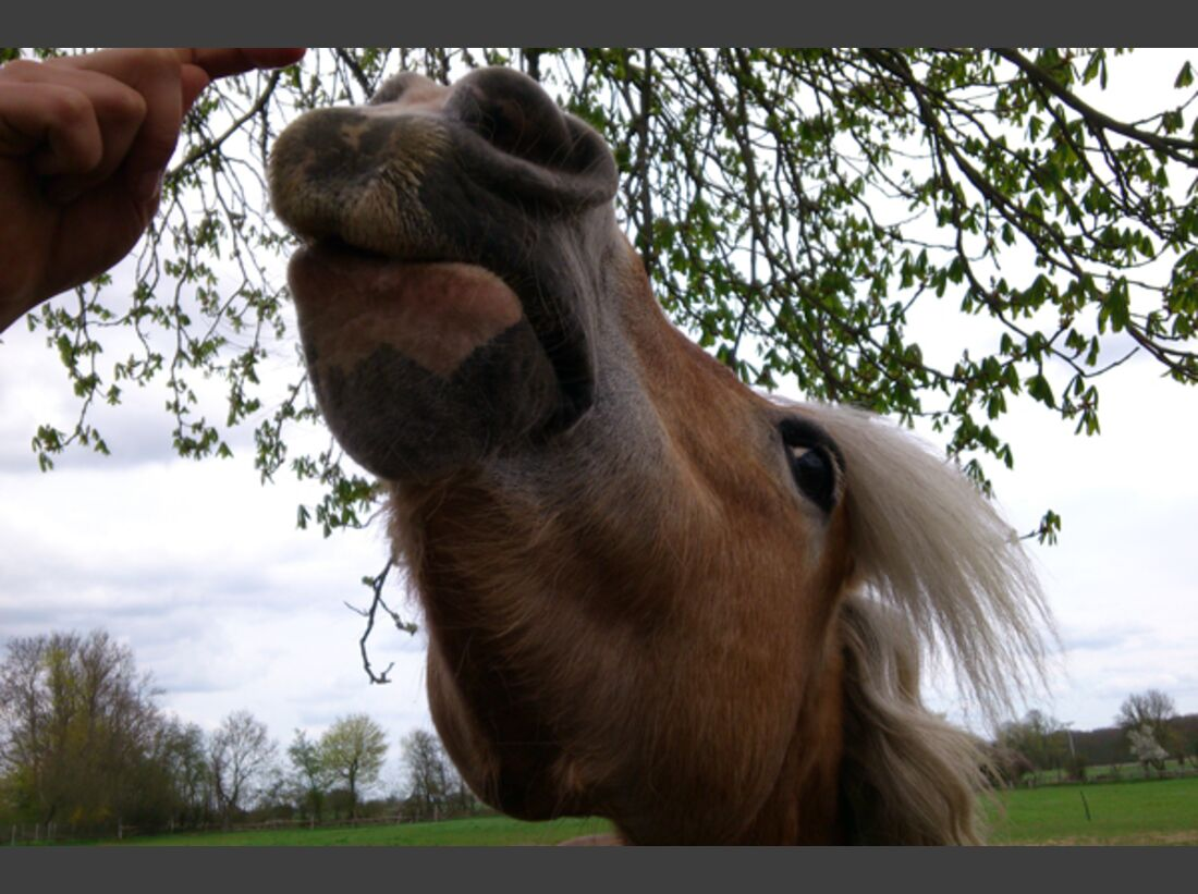 CAV Leserfotos Pferdenasen 13