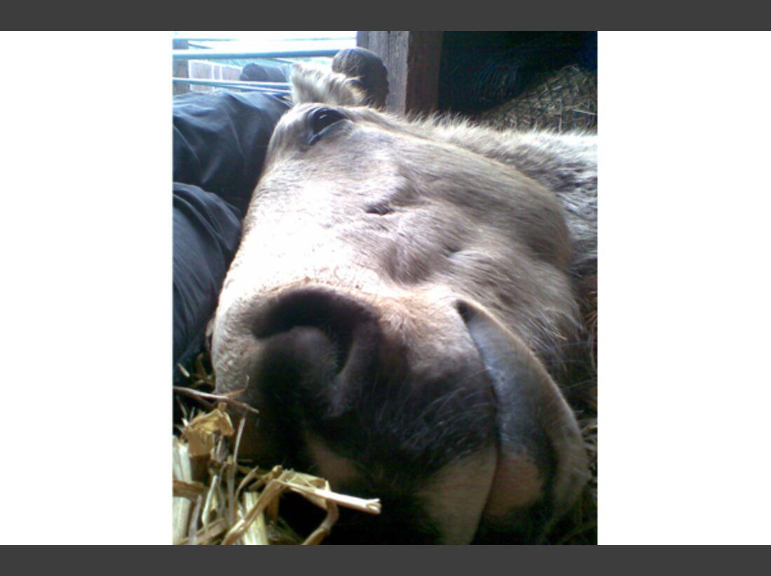 CAV Leserfotos Pferdenasen 15