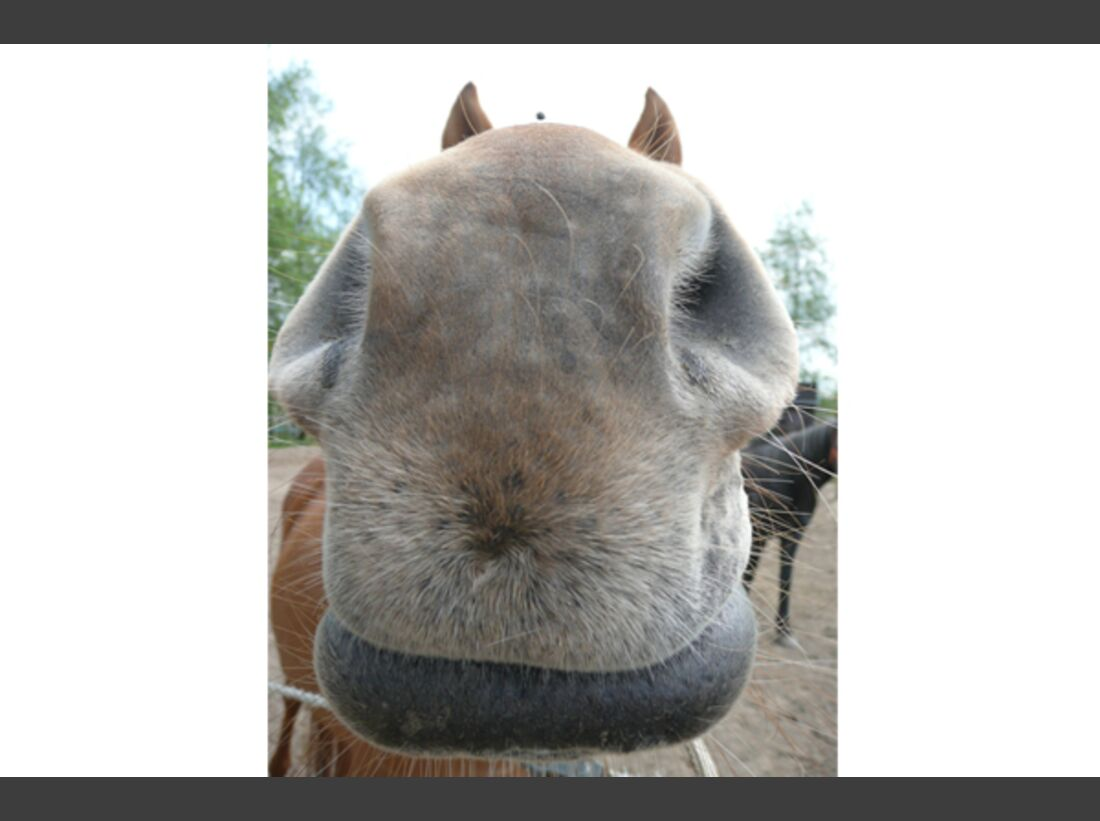 CAV Leserfotos Pferdenasen 26