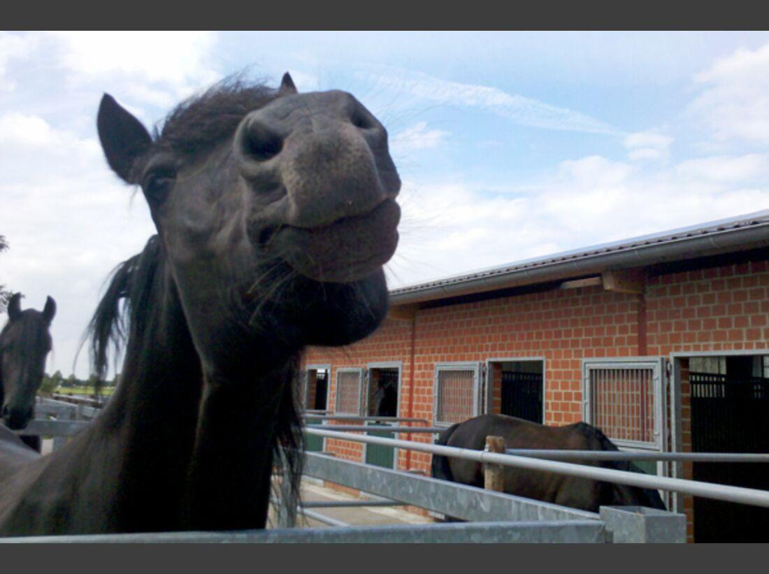 CAV Leserfotos Pferdenasen 29
