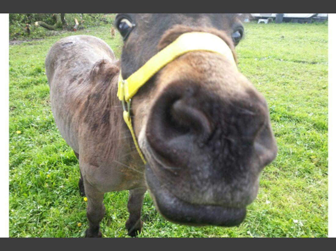 CAV Leserfotos Pferdenasen 30