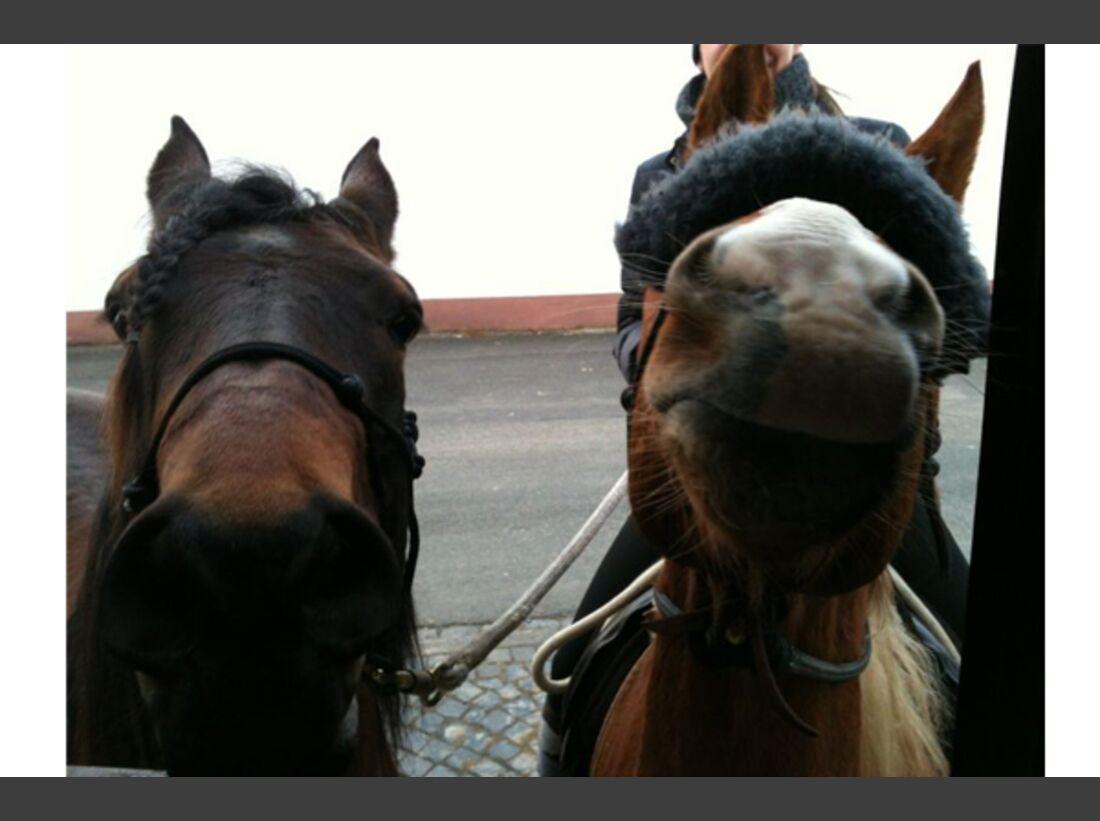 CAV Leserfotos Pferdenasen 36