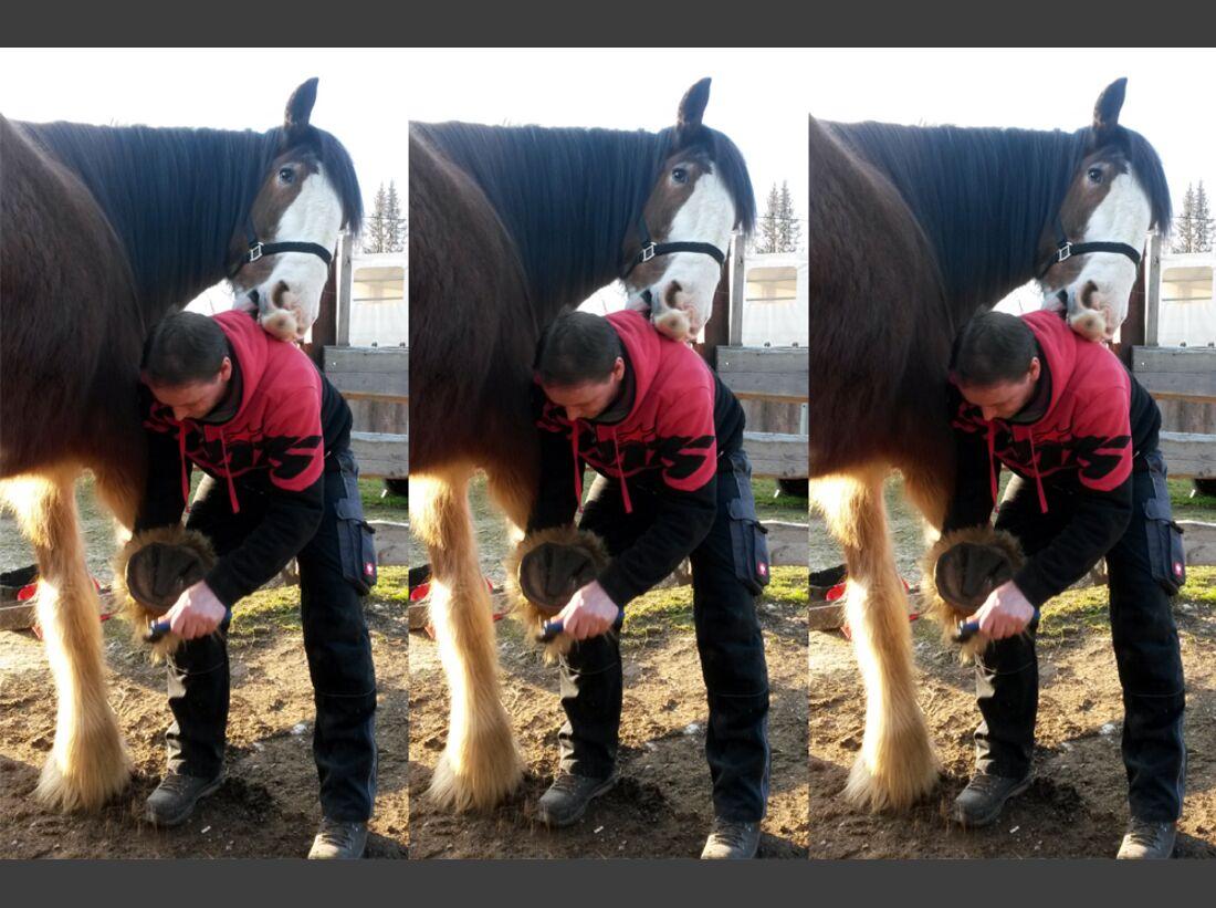 CAV Maenner lieben Pferde Tom Lerche