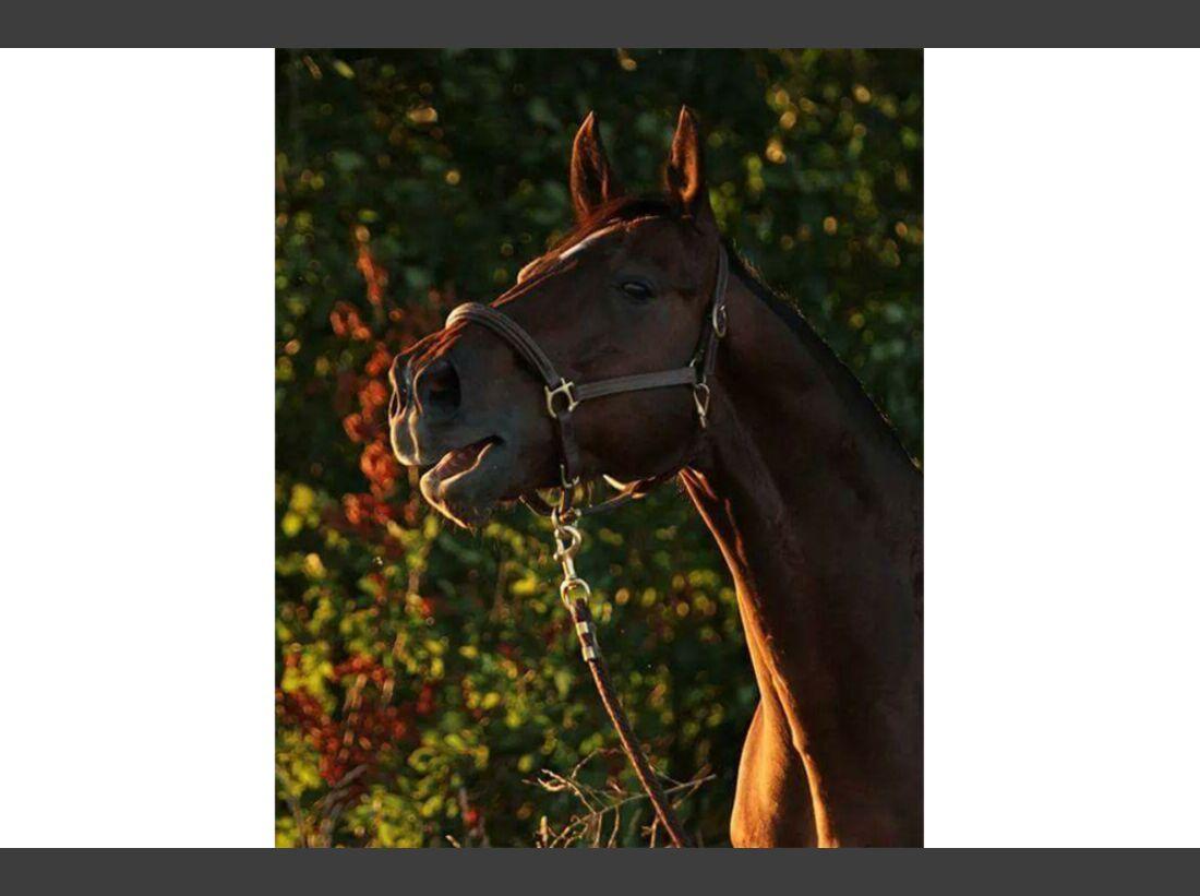 CAV Mein wieherndes Pferd Leserfotos Manuela Luksch