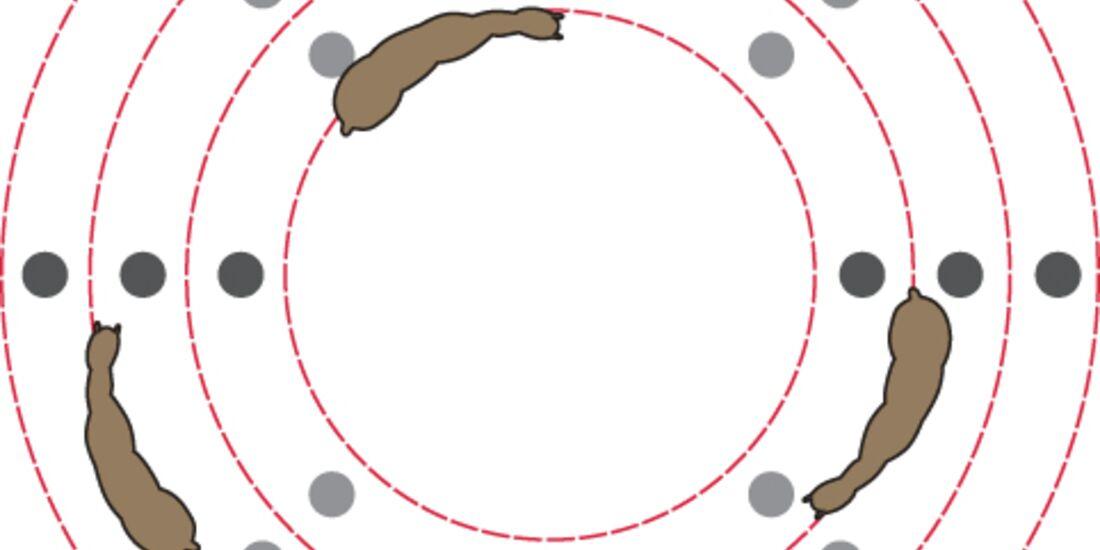 CAV Meisterkreis Übungen Kreis Hütchen 7