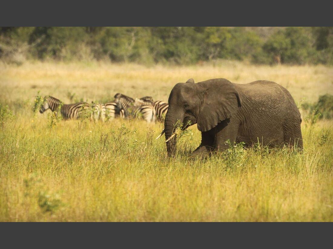 CAV Pegasus Afrika Elefant Zebras